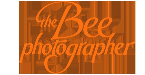 The Bee Photographer