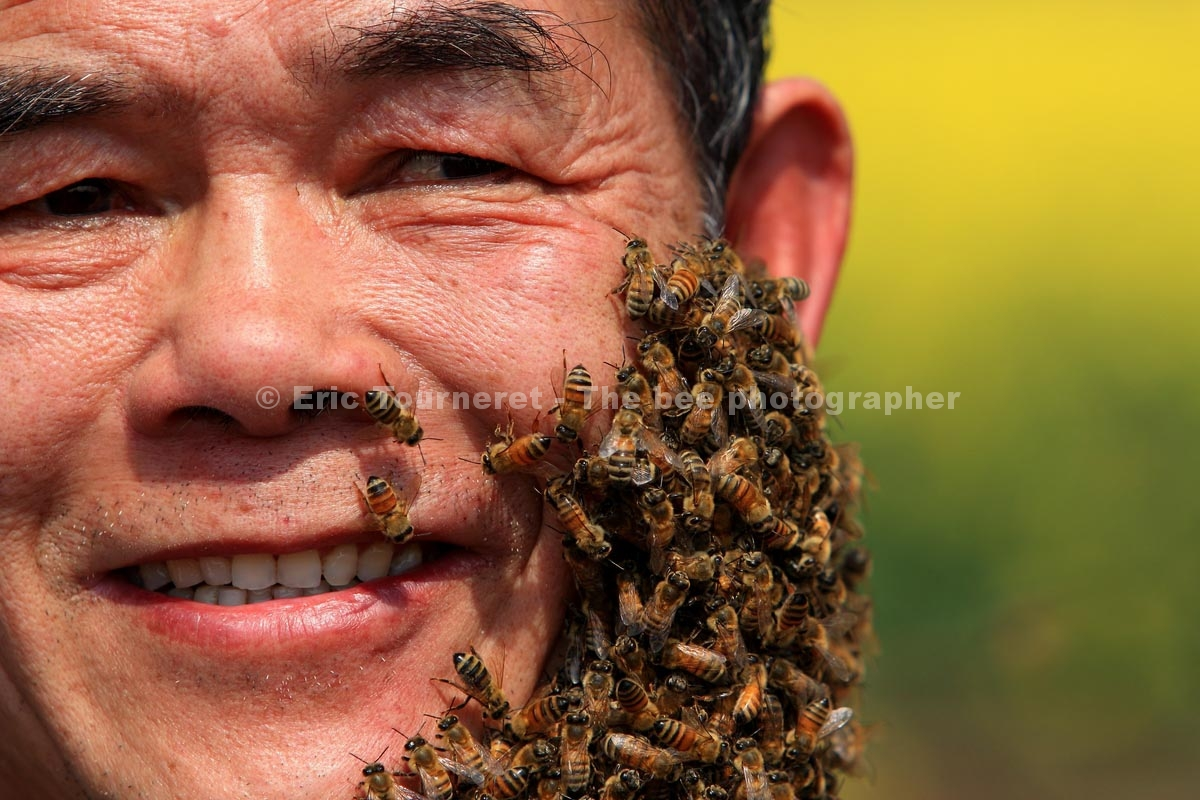 Chine : la plus grande fête d'apiculture du monde