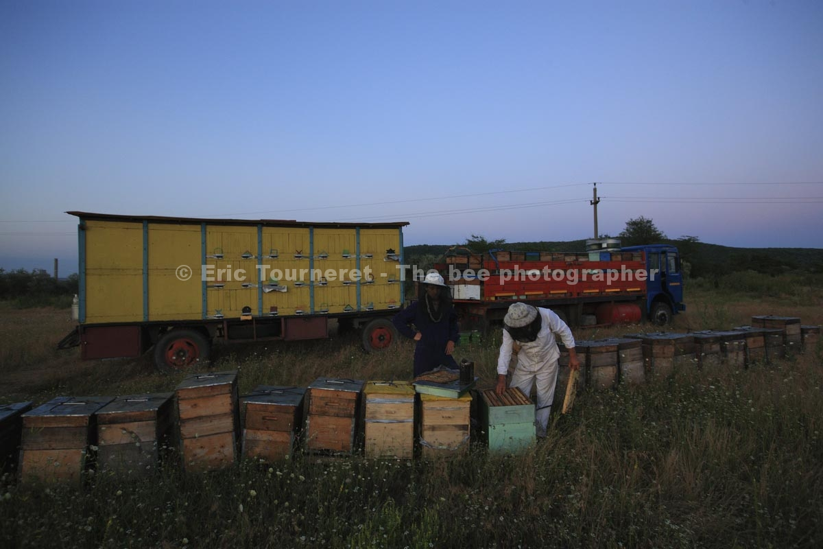 Romania's migrants Beekeepers