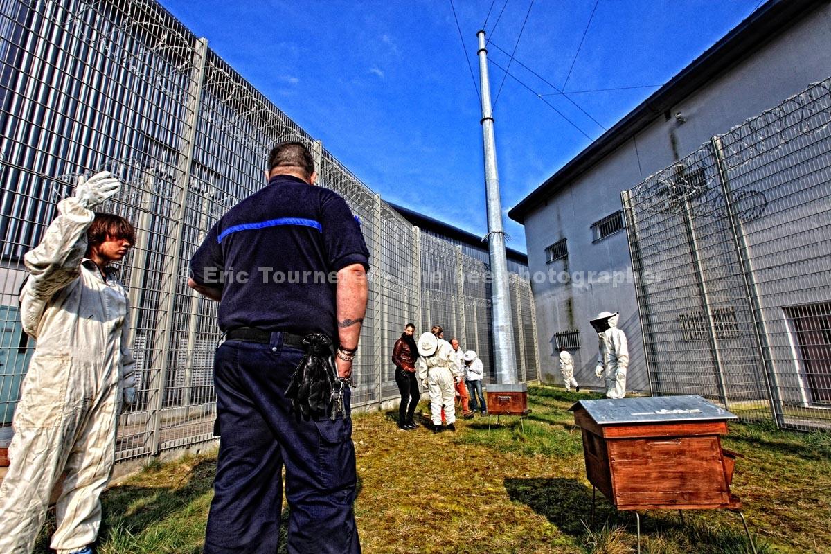 France: 100 000 abeilles en prison
