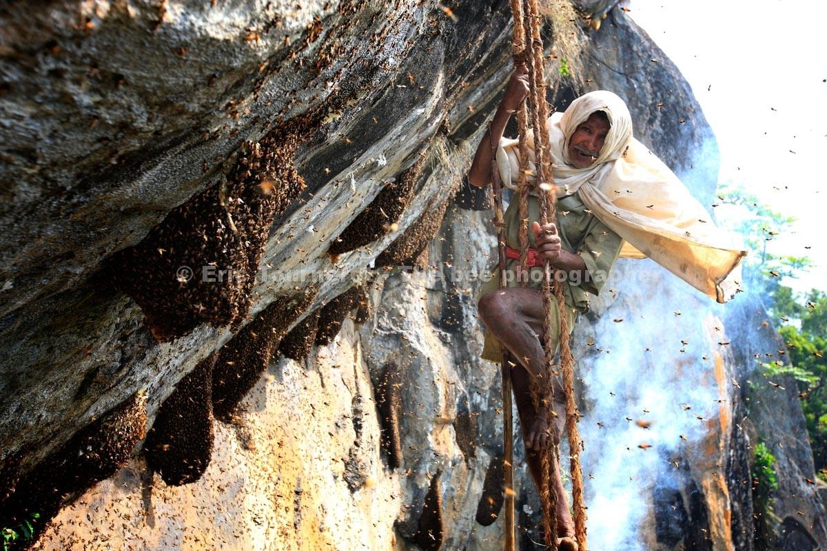 Inde: le miel des intouchables