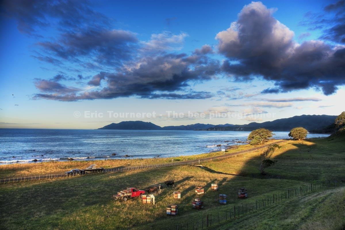 Nouvelle-Zélande: le trésor des Maoris
