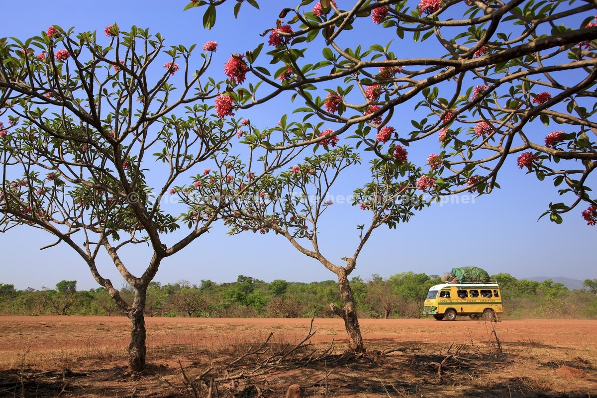 Cameroun : un paradis d'abeilles