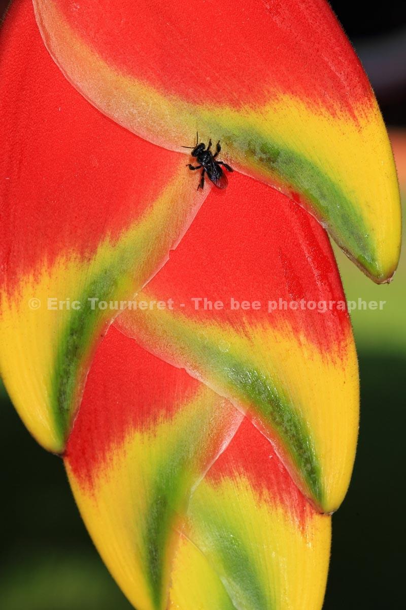 The Bee Photographer – Eric Tourneret - photo#42