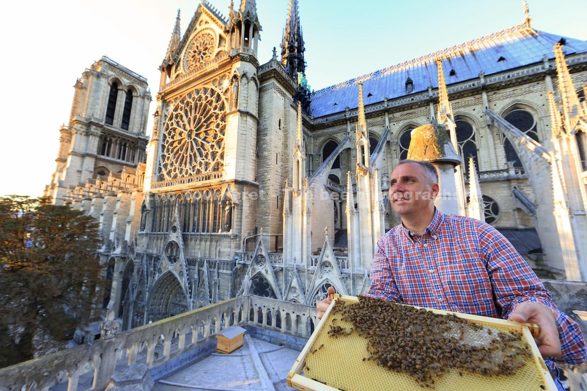 Apiculture sur les toits de Paris