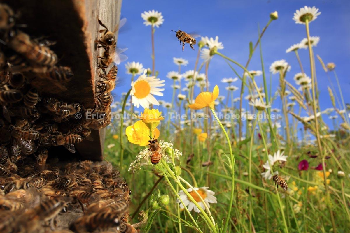 Autour de la ruche