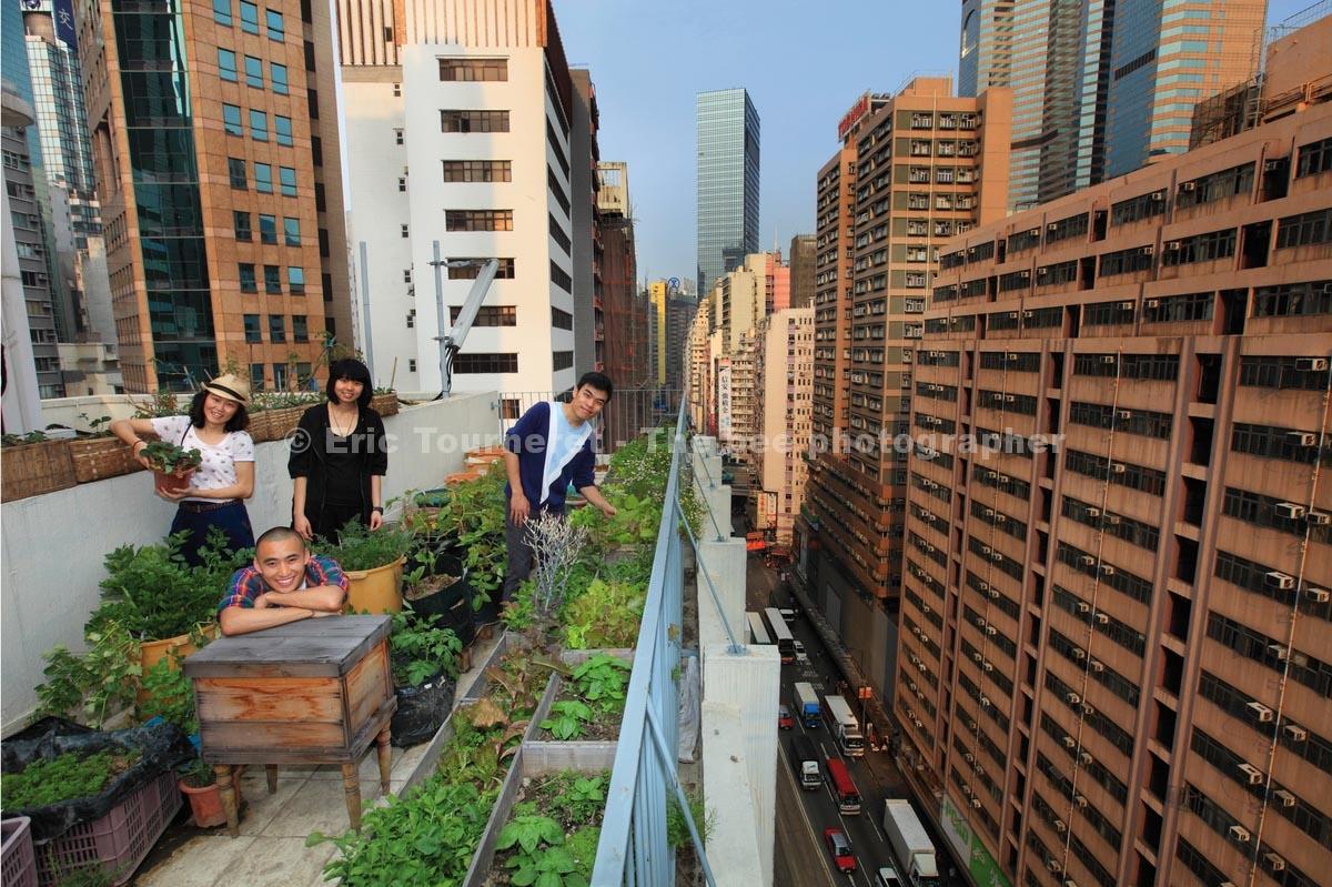 Hong Kong, apiculture urbaine